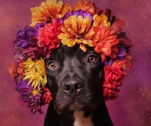 dog, flowers, and red image