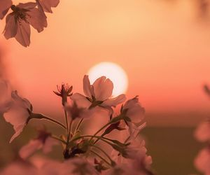 peach, photography, and sunset image