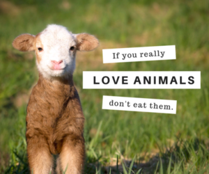 animals, empathy, and vegan image