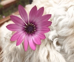 dog, flor, and flowers image