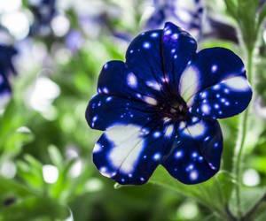 background, petunia, and purple image