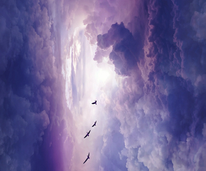 clouds, sky, and bird image