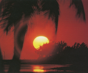 sunset, orange, and palms image