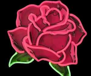 rose, wallpaper, and neon image