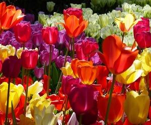 amsterdam, flora, and garden image