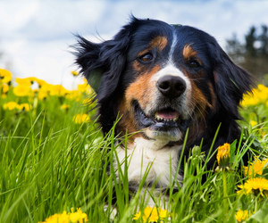 dog, dogs, and animals image