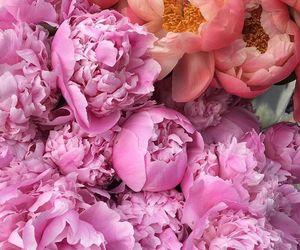 flowers, peach, and peonies image