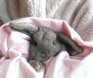 cute bunny 💗