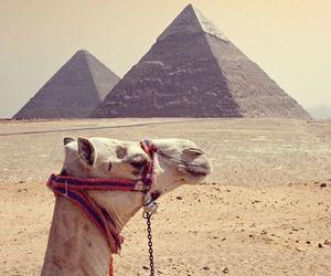 camel, egypt, and pyramids image
