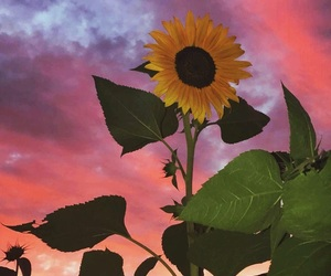 clouds, sunflower, and sunset image
