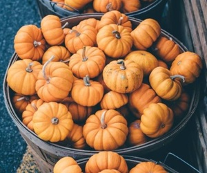 pumpkin, Halloween, and fall image