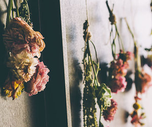 dried flowers, hanging flowers, and wall flowers image