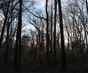 forest, paranormal, and stranger image