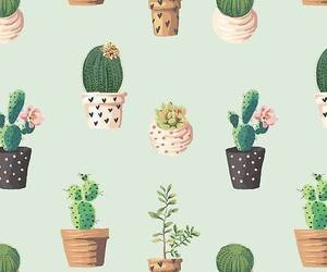 cactus, wallpaper, and background image