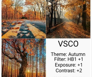 autumn, effect, and Effects image