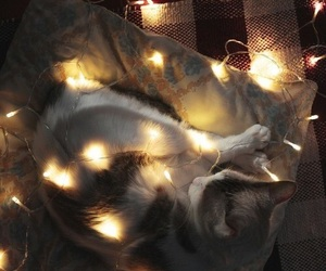 light, cat, and christmas image