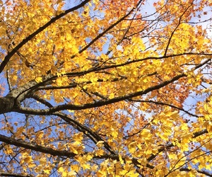 autumn, beautiful, and sky image