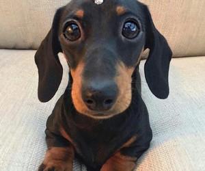 dog, animal, and ring image