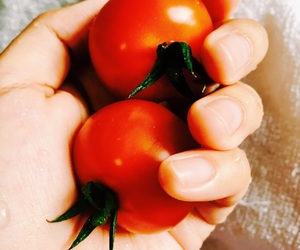 cherry, tomato, and tomatoes image