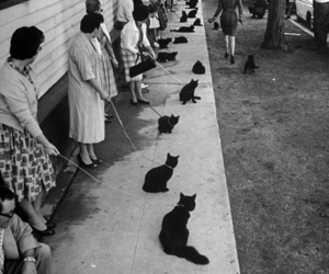 cat, black and white, and vintage image