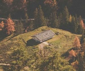 autumn, lockscreen, and home image