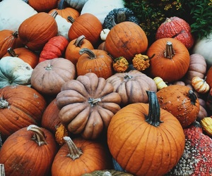 autumn, brown, and Halloween image