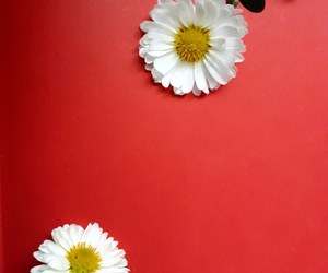 red, background, and flowers image