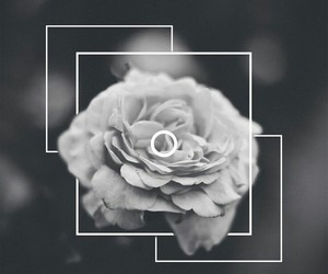 flowers, wallpaper, and black and white image