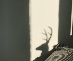 bed, blog, and stag image