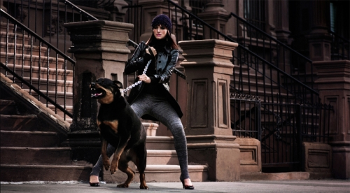 dog and rottweiler image