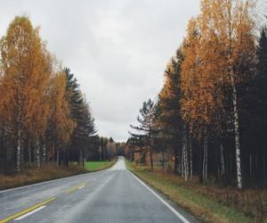 autumn, beautiful, and coloured image