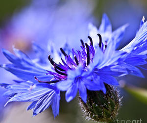 blue, photography, and purple image