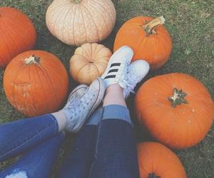 adidas, autumn, and converse image