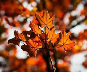 aesthetic, leaves, and autumn image