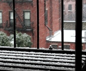 cozy, gif, and snowing image