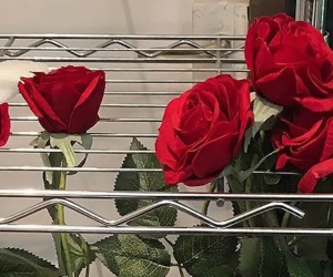rose, flowers, and header image
