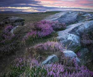 beauty, fields, and lavender image