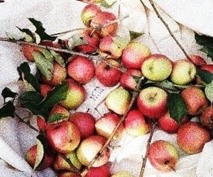 apple, autumn, and yummy image