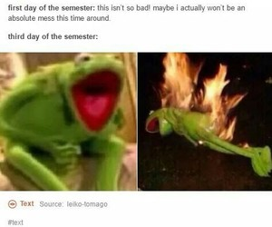 college, funny, and kermit image