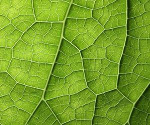 garden, leaf, and strange image