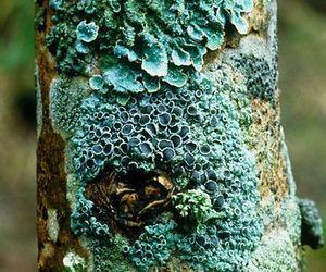 fungus, garden, and strange image