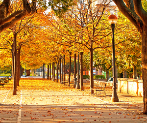 autumn and park image