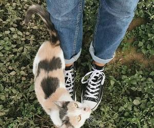 alternative, black, and cat image