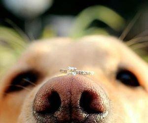dog, wedding, and love image