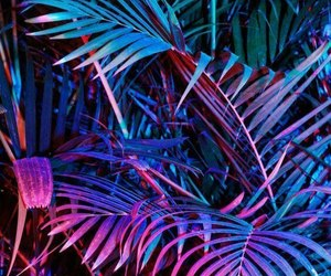 neon, wallpaper, and plants image