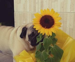 brazil, dog, and girassol image