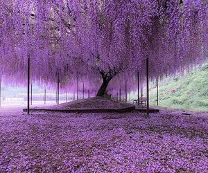 purple, tree, and flowers image