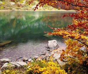 nature, tree, and lake image