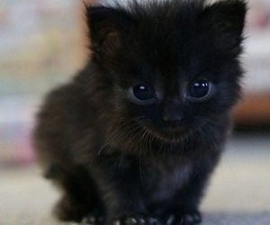 black, kitten, and cute image