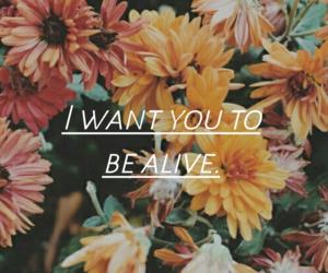 flowers, life, and Lyrics image